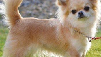 Как выбрать себе породу собаки по фото и названию