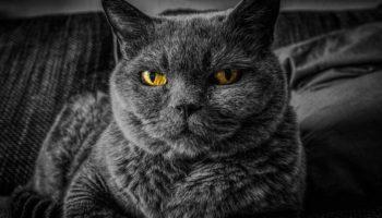 YouTube запустил первый в мире хоррор для кошек